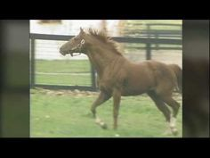 "Secretariat - ""He ran because he was loving it."" This will bring a tear to every true lover of horse racing."