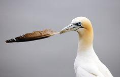Seaside Photography: how to photograph seabirds like a pro | Digital Camera World
