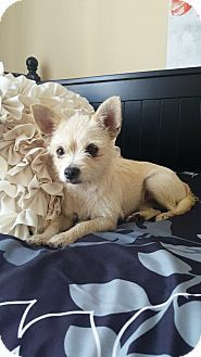 Terrier (Unknown Type, Medium) Mix Dog for adoption in Gilberts, Illinois - Sunny
