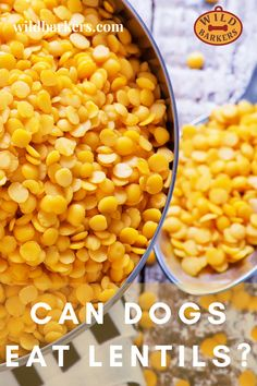 Can dogs eat lentils? Yes, once cooked lentils are safe for dogs in moderate amounts. They are a healthy source of plant-based protein, rich in fiber, may promote weight loss, and can potentially benefit a dog with diabetes. Vegan Dog Food, Vegetarian Dog Food Recipe, Dog Food Recipes, What Are Lentils, Lentils Benefits, Dog Food Brands, Can Dogs Eat, Diabetic Dog, Plant Based Protein