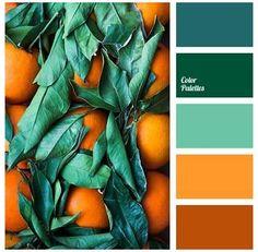 Orange Color Palettes, Color Schemes Colour Palettes, Green Color Schemes, Green Colour Palette, Color Combos, Green Colors, Nature Color Palette, Spring Color Palette, Vintage Colour Palette
