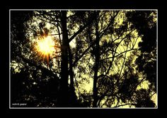 Sol de invernno