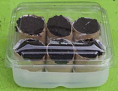 toilet paper seed starters in strawberry container for mini greenhouse!
