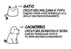 Sobre cães e gatos