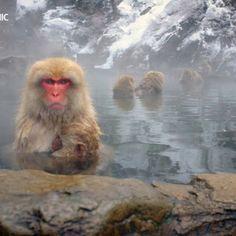 Monkey monkey monkey monkey