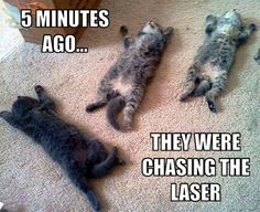 Funny Pictures of the day -90 pics- 5 Minutes Ago They Were Chasing The Laser