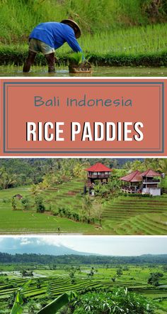 One of the must-sees when traveling to #BaliIndonesia is one of its rice paddies. Learn more about where to find them. #Travel #TravelBali #TravelAsia #BaliRiceFields #BaliThingsToSee Best Countries To Visit, Cool Places To Visit, Places To Travel, Travel Destinations, Bali Travel Guide, Asia Travel, Travel Abroad, Travel Inspiration, Travel Ideas