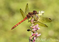 https://flic.kr/p/PwNDGY   7674-dragonfly