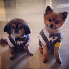 DIY Dog tuxedo. Pets as ring bearer
