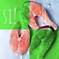 El salmón es una fuente de omega 3, el cual ayuda a que el pelo de tu hijo de 4 patas se mantenga sano y brillante ❤️ También les proporciona proteína y aminoácidos, los cuales mantienen sanos a tu mejor amigo  Recuerda que este pescado se le debe servir cocinado para evitar que le caiga mal  #PerroFeliz #chachayelgalgo #pasteleriacanina #paletasparaperros #amorperruno #mascotas #peluditos #perrosaludable #alimentacioncanina #YoCreoEnCali #salmon #pescado #cali #calico #colombia