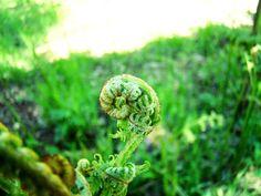 Casa Edera: Sculture vegetali #nature #spiral