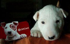 baby english bull terrier target