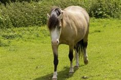 Many owners are unaware that a handful of concentrate a day does not come close to providing all the nutrients their horse needs.  #horses  https://www.pinterest.com/pin/find/?url=http%3A%2F%2Fkppusa.com%2Ftips-and-topics%2Fwhen-handful-isnt-enough%2F