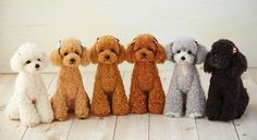 Pom Pom Animals, Felt Animals, Cute Animals, Japanese Dog Grooming, Dog Grooming Styles, Animal Yoga, Poodle Cuts, Tea Cup Poodle, Dog Haircuts