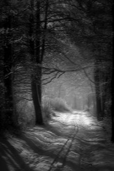 B / Winter / snow / landscape / lovely / neige light / mysterious Beautiful World, Beautiful Places, Foto Picture, Winter Szenen, Winter Road, Winter Walk, Winter Night, Snow Scenes, All Nature