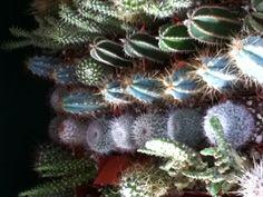 Cacti, anyone?
