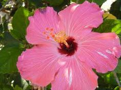 mexico flowers - Google Search