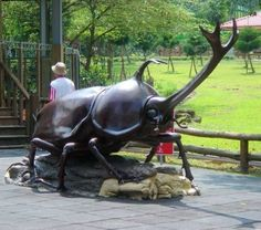 Giant Rhinoceros beetle in Seoul, Korea