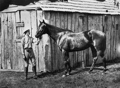 Jerry Bailey ( father of Brody Bailey & grandfather of Tom Bailey - a great 16 Decades of Bailey Son Racing taken from their fathers. Picture from 1954.  Tennesee Honey the race horse