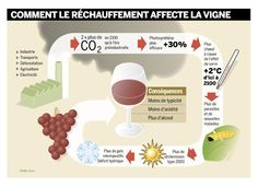How Global Warming affects Wine production, by Claivaz Pascal (France)