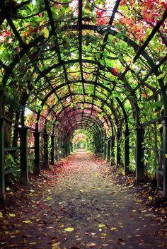 Autumn alley in Peterhof, Saint Petersburg, Russia.