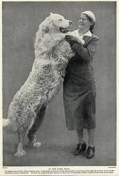Great Pyrenees Pyrenean Mountain Dog and Lady Owner Great 1934 Vintage Dog Print   eBay