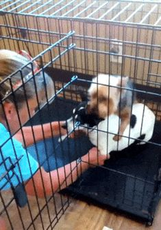 No, I will not let you go #dogs #cages
