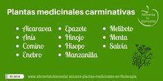 Plantas medicinales carminativas
