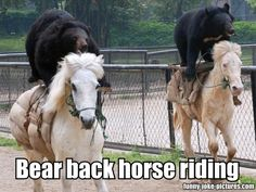 Funny Bear Back Horse Riding Picture Pun Punology
