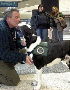 Heros Legacy: From Abandoned Dog to Therapy Dog