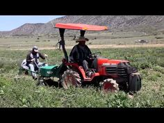Young Living Lavender Farm - Weeding with Dr. Cole Woolley - YouTube www.EssentialOilOrders.com