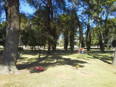 Trees in Evergreen Cemetery Tucson, Cemetery, Evergreen, Sidewalk, Trees, Clay, Clays, Side Walkway, Tree Structure