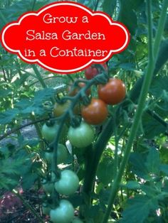 How to Grow a Salsa Garden in a Container - The Best of Life Magazine