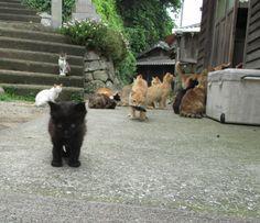 2015年最も感動をした光景 青島の猫の画像 | 猫の島 青島物語