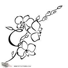 orchids, flower, love, beauty, charm, thoughtfulness