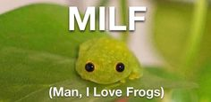 Sapo Frog, Stupid Funny Memes, Hilarious, Sapo Meme, Frog Meme, Frog Art, Cute Frogs, Funny Frogs, Frog And Toad