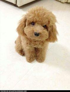 This looks like my very first doggie....Jason.