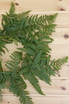 Plant Leaves, Plants, Diy, Bricolage, Diys, Planters, Handyman Projects, Do It Yourself, Plant