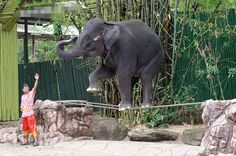 Animal Protector - World Animal Protection Australia World Animal Protection, Take The First Step, Animals Of The World, Vulnerability, All Over The World, Happy Life, Elephant, Australia, Pets