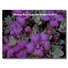 Purple Texas #Sage 2014 #Calendar #Postcard - 2014 calendar on the back
