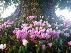 Hester's Plant Blog