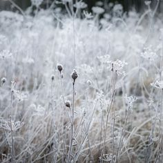 White field Nature View, Image Types, Frost, Outdoors, Ice, Flowers, Ice Cream, Outdoor Rooms, Royal Icing Flowers