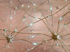Lights! Neurons! Action! Binge-drinking lab rats go cold turkey | Cutting Edge - CNET News