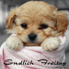 ein Bild für's Herz 'gif endlich freitag.gif' von Edith. Eine von 1014 Dateien in der Kategorie 'guten-Morgen-Bilder' auf FUNPOT.