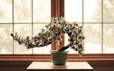 bonsai.jpg (1920×1200)