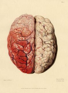 Grabado sobre la circulación del cerebro del Dr. Bright (1829)