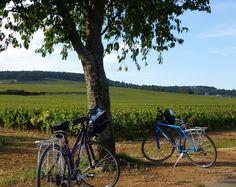 Burgundy cycling in vineyards!