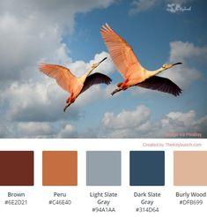 A living coral sunset color palette