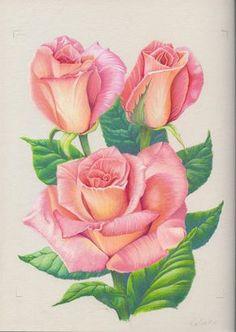 pink roses by 1976Kunako.deviantart.com on @deviantART