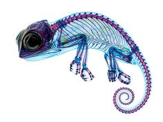 A Delicate Chameleon Displays Vivid Colors Under The Microscope | Popular Science